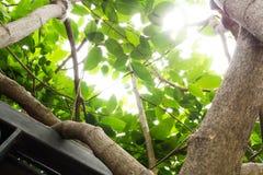 Naturaleza con la luz de la mañana imágenes de archivo libres de regalías