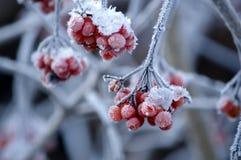 Naturaleza congelada Fotografía de archivo
