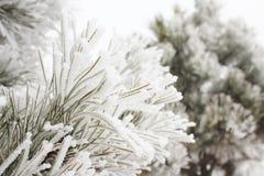 Naturaleza congelada Imagenes de archivo