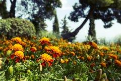 Naturaleza crimea Flores en el parque Fotografía de archivo libre de regalías