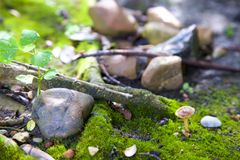 Naturaleza cubierta de musgo Fotografía de archivo libre de regalías