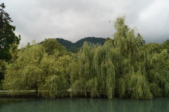Naturaleza de Abjasia Imagen de archivo