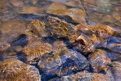 Naturaleza de Altai Fotos de archivo libres de regalías