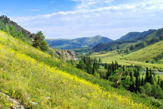 Naturaleza de Altai Imagen de archivo libre de regalías