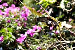 Naturaleza de Asia Fotos de archivo
