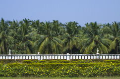 Naturaleza de Asia, palmera Imagen de archivo