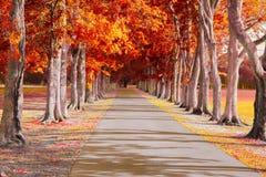 Naturaleza de Autumn Drive Trees Background Imágenes de archivo libres de regalías