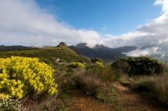 Naturaleza de Ciudad del Cabo Fotos de archivo libres de regalías