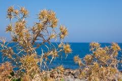 Naturaleza de Crete foto de archivo libre de regalías