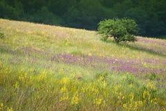 Naturaleza de Crimea imagenes de archivo