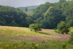 Naturaleza de Crimea foto de archivo