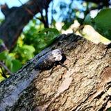 Naturaleza de Crimea del árbol del insecto Imágenes de archivo libres de regalías