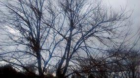 Naturaleza de enero Fotos de archivo libres de regalías