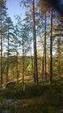 Naturaleza de Finlandia Fotografía de archivo