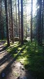 Naturaleza de Finlandia Imagen de archivo