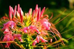 Naturaleza de flores Imagen de archivo libre de regalías