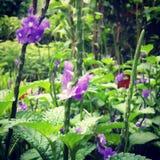 Naturaleza de la flor Fotografía de archivo libre de regalías