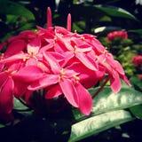 Naturaleza de la flor Imágenes de archivo libres de regalías