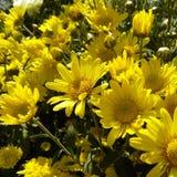 Naturaleza de la flor Foto de archivo libre de regalías