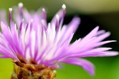 Naturaleza de la flor fotografía de archivo