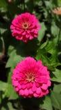 Naturaleza de la flor Foto de archivo