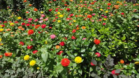 Naturaleza de la flor Imagenes de archivo