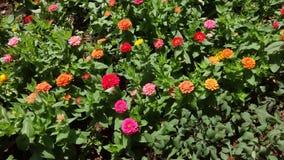 Naturaleza de la flor imagen de archivo libre de regalías