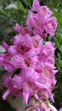 Naturaleza de la flor fotos de archivo libres de regalías