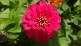 Naturaleza de la flor Imagen de archivo