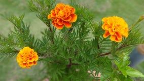 Naturaleza de la flor fotos de archivo