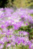 Naturaleza de la flor de la falta de definición del foco Foto de archivo libre de regalías