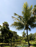 Naturaleza de la Florida Fotografía de archivo