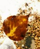 Naturaleza de la hoja Fotografía de archivo libre de regalías