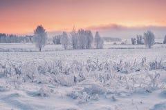 Naturaleza de la mañana del invierno imágenes de archivo libres de regalías
