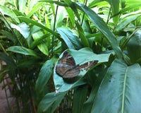 Naturaleza de la mariposa Imagenes de archivo