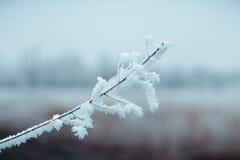 Naturaleza de la nieve del invierno Foto de archivo libre de regalías