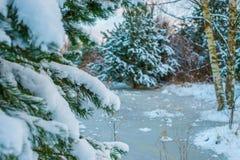Naturaleza de la nieve del invierno Imagenes de archivo