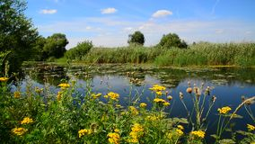Naturaleza de la parte central de Rusia en verano Foco delantero almacen de video