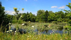 Naturaleza de la parte central de Rusia en verano Foco delantero metrajes