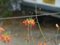 naturaleza de la planta de la flor Fotografía de archivo