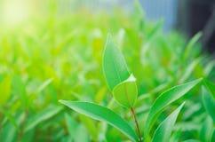 Naturaleza de las hojas para el papel pintado o el fondo fotos de archivo libres de regalías