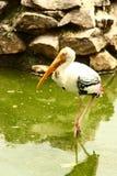 Naturaleza de los pájaros fotos de archivo