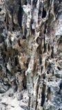 naturaleza de madera oxidada hermosa Foto de archivo libre de regalías