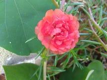 Naturaleza de mi propio jardín Foto de archivo libre de regalías