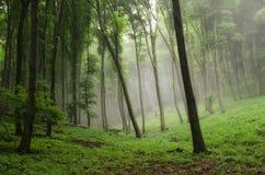Naturaleza de niebla Imagenes de archivo