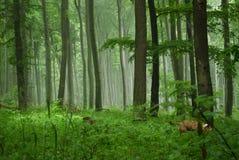 Naturaleza de niebla Foto de archivo