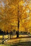Naturaleza de oro del otoño Foto de archivo