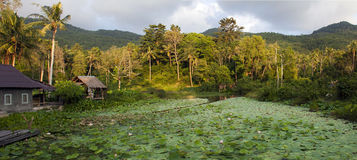 Naturaleza de Tailandia Imágenes de archivo libres de regalías