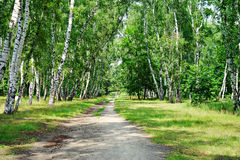 Naturaleza de Ucrania Myrhorod Fotos de archivo libres de regalías