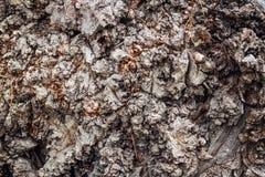 naturaleza del árbol de la textura del marrón del fondo de la corteza Fotos de archivo libres de regalías